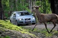 Accidente de circulación con animales